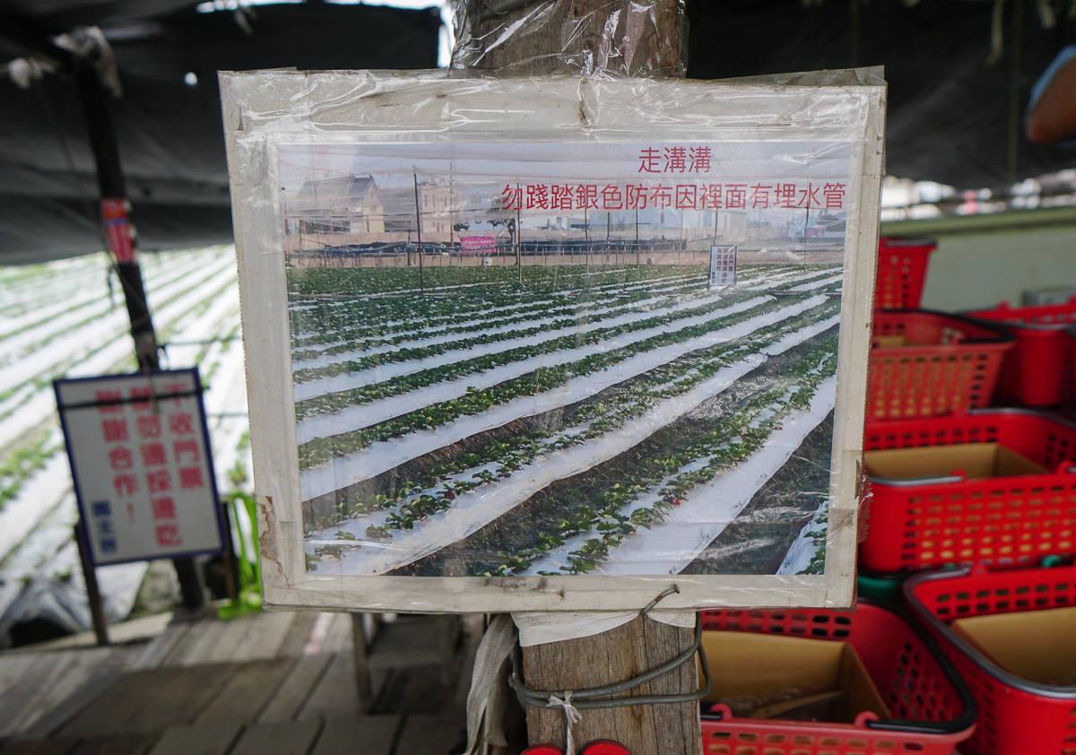 [高雄草莓園]松田觀光果園-不出高雄市區也能採草莓!草莓不大但香甜~ @美食好芃友