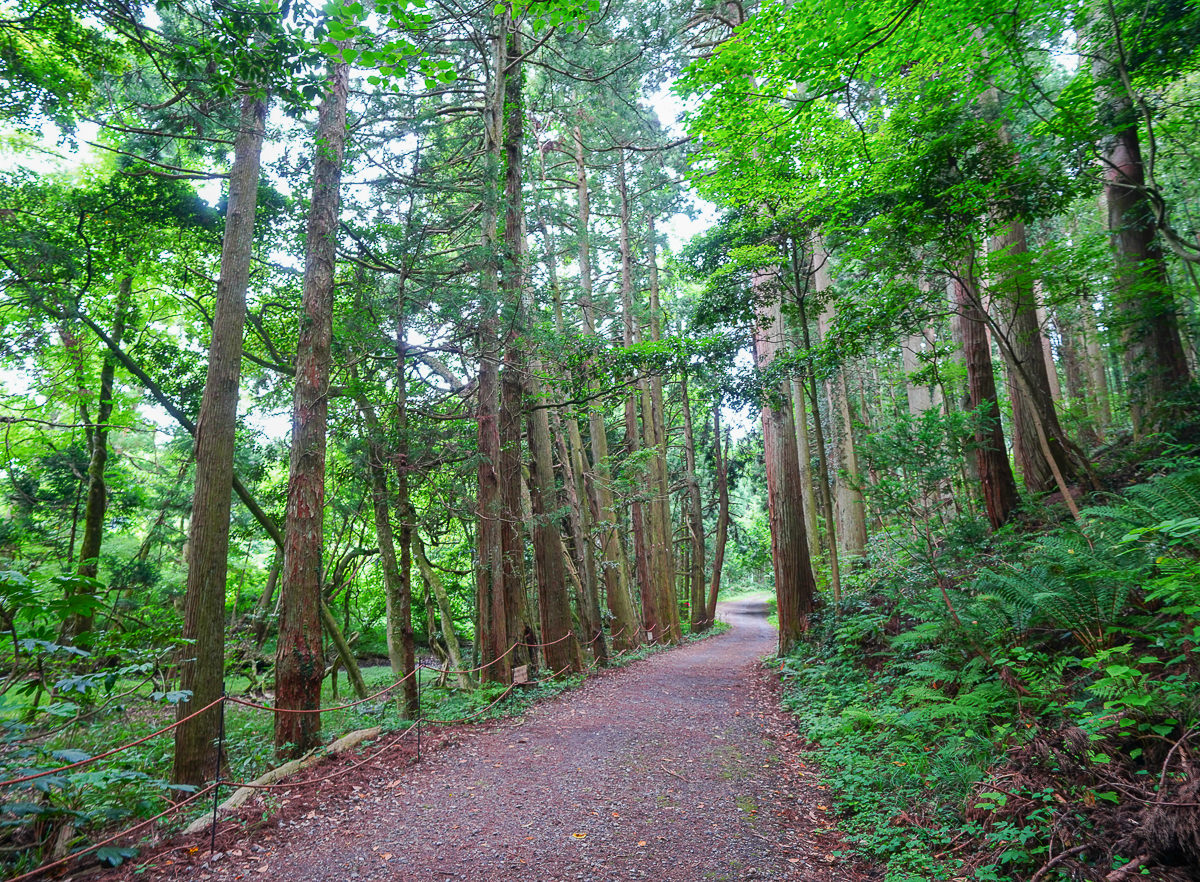 [山形景點]丸池樣-日本東北秘境!森林包圍的藍綠色夢幻池景 @美食好芃友