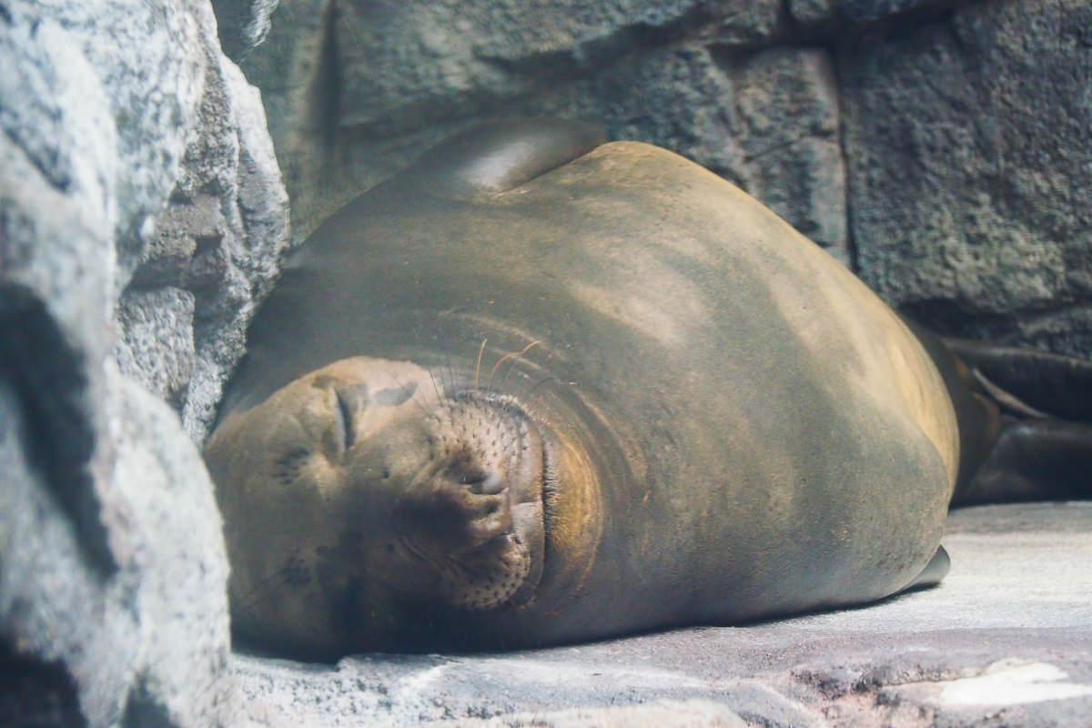 [山形景點]鶴岡加茂水族館-全世界最大水母水族館~必打卡夢幻水母玻璃牆 @美食好芃友