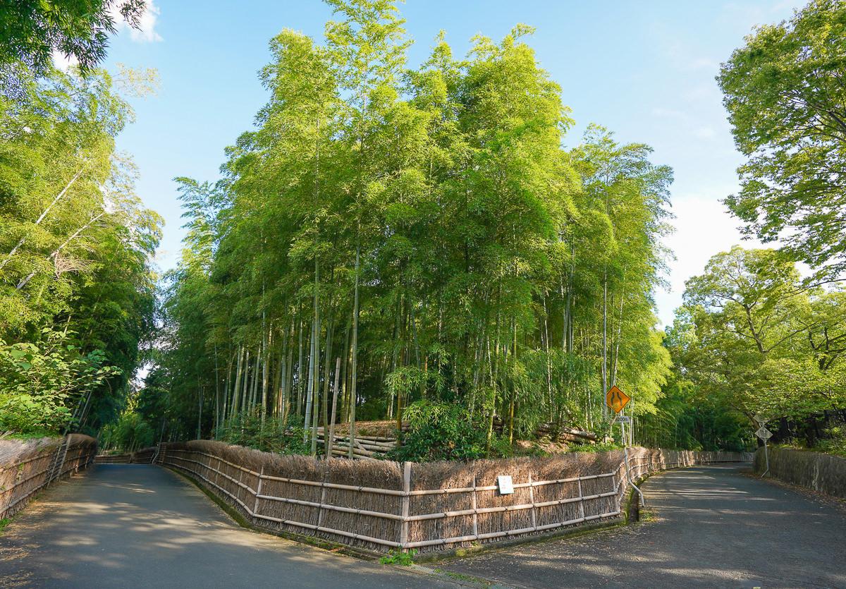 [京都景點推薦]京都向日竹の径.竹林公園-比嵐山更幽靜的京都竹林小徑 @美食好芃友
