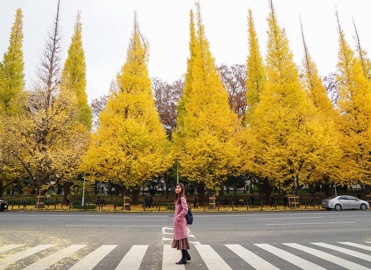 [東京銀杏推薦]明治神宮外苑銀杏祭-東京最夯的銀杏景點~超壯觀銀杏大道 @美食好芃友