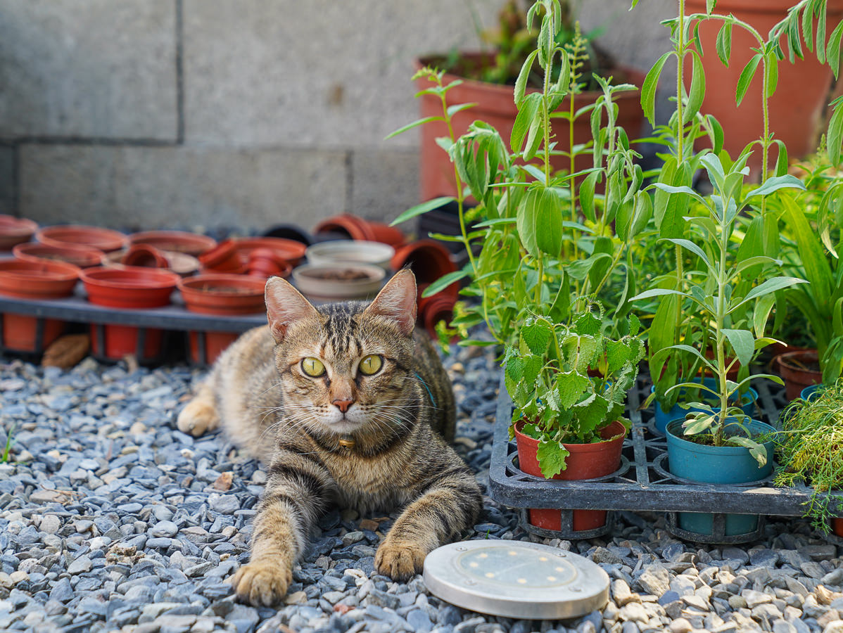 [高雄]肉肉栽培研究所-多肉植物主題景觀咖啡廳~跟摩艾一起嘟嘴賣萌 @美食好芃友
