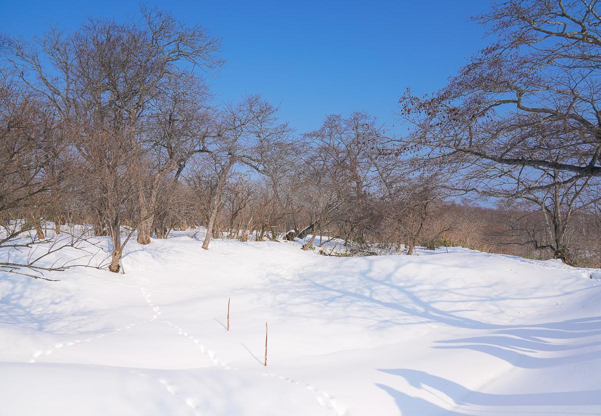 [北海道道東]北海道雪中健行-標津町ポー川史跡自然公園~不滑雪的有趣雪地體驗! @美食好芃友