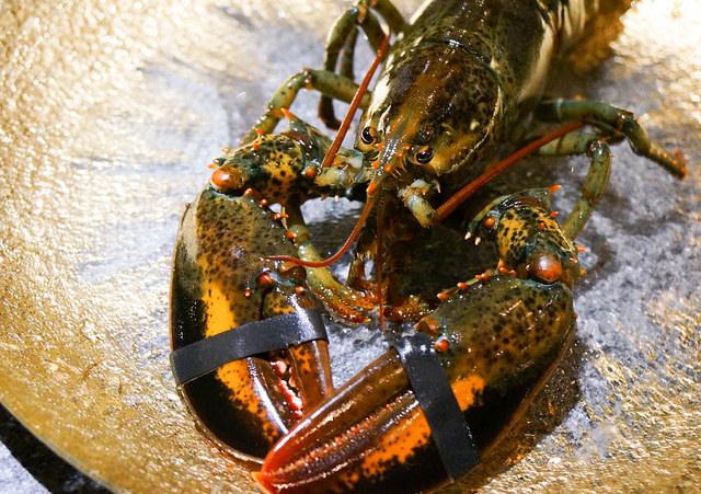 [高雄]頂級活體龍蝦個人火鍋!母親節帶媽媽送龍蝦唷-金荷涮涮鍋 @美食好芃友