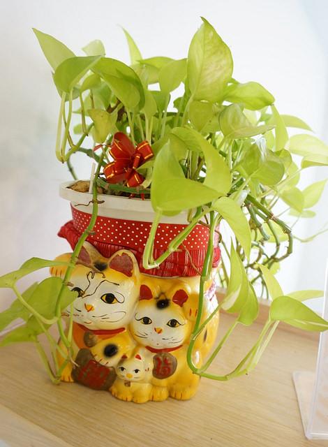 [高雄]轉角遇見招財貓-御見貓株式會社 @美食好芃友